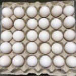 Uova da cova delle specie e razze allevate